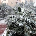 Сочи зима 2.jpg